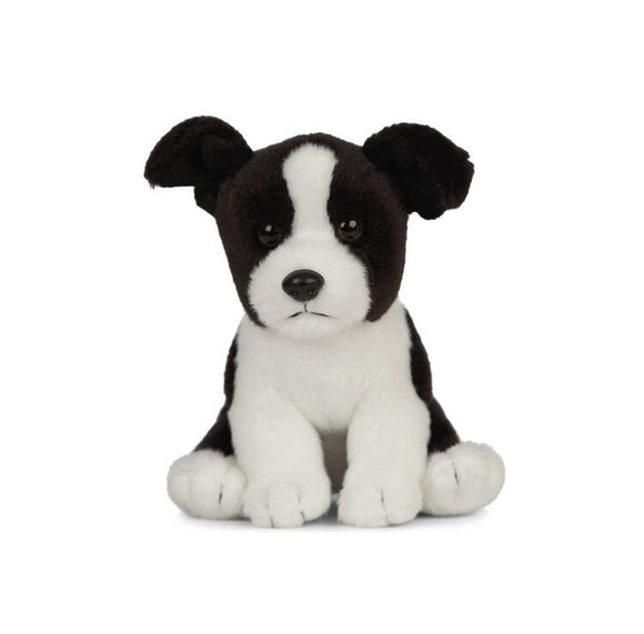 A soft, black and white puppy sitting upright.