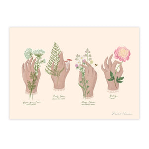 An illustration of four hands holding different wildflowers. Each flowers common and scientific name is underneath in green cursive and capital letters.