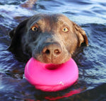 Dawg-Nut Indestructible Rubber Floating Donut Chew Toy- Guaranteed For Life