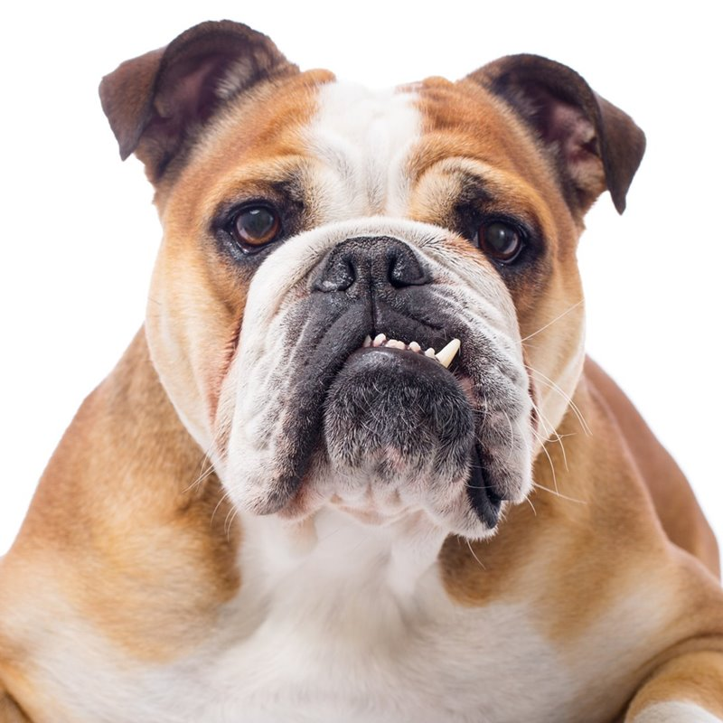 Why You Need To Brush Your Dog's Teeth Daily