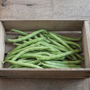 Vegetable: Bean-Green provider