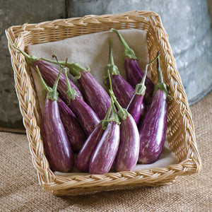 Vegetable: Eggplant- Fairy Tale