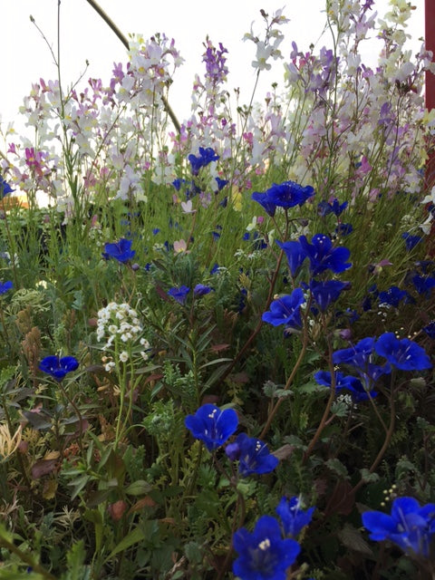 Flowers: Fairy Meadows mix