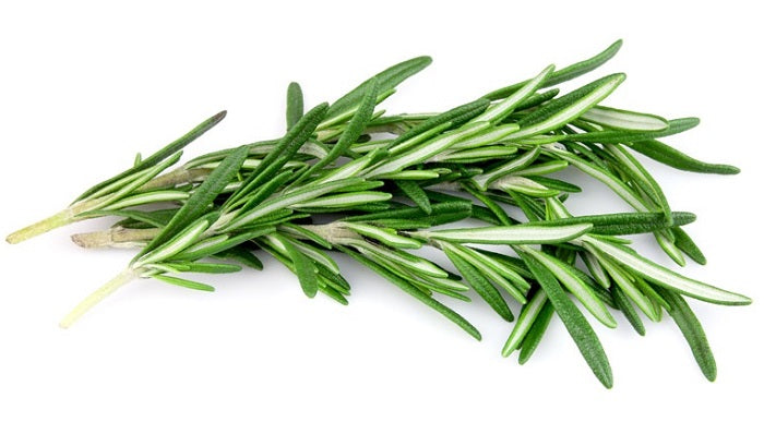 Herb: Rosemary-Rosmarinus officinalis