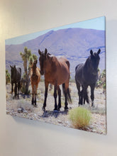 Load image into Gallery viewer, Wild West, Wild horse family, Nevada, USA