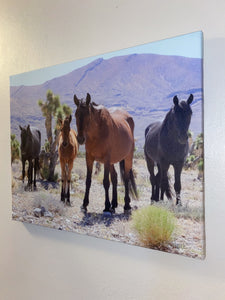 Wild West, Wild horse family, Nevada, USA