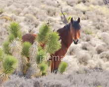 Load image into Gallery viewer, Wild Horse Nevada