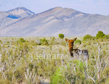 Load image into Gallery viewer, Wild Elk Nevada