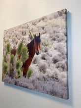 Load image into Gallery viewer, I See You, Wild horse and Joshua tree, Nevada, USA