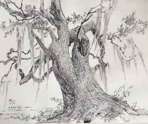 The Audubon Oak