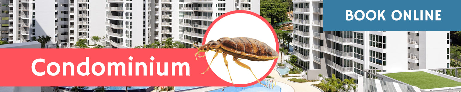 Get Rid of Bed Bugs in Condo
