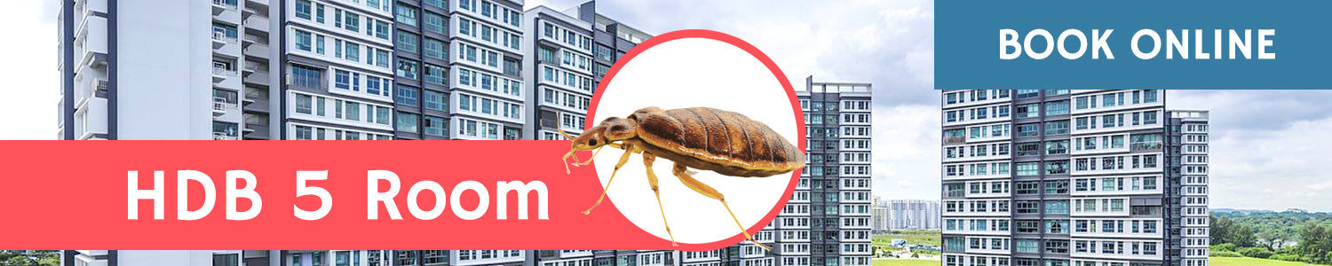 Get Rid of Bed Bugs in HDB 5 Room