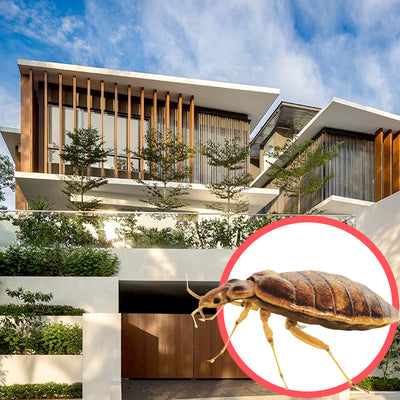 Bed Bugs Singapore Bungalow 2 Storeys
