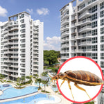 Bed Bugs Singapore Condo