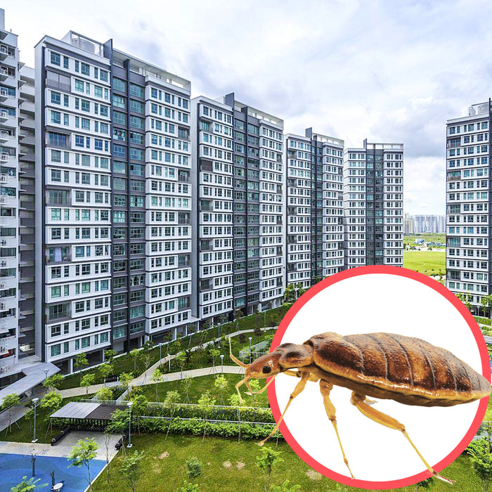 Bed Bugs Singapore HDB 4 Room