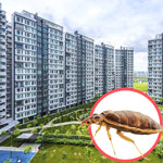 Bed Bugs Singapore HDB 5 Room