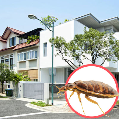 Bed Bugs Singapore Terrace 3 Storeys