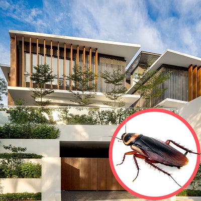 Cockroaches Singapore Bungalow 3 Storeys