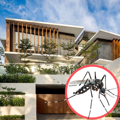 Mosquitoes Singapore Bungalow 3 Storeys