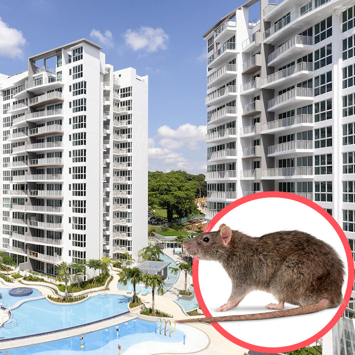 Rodents Singapore Condo