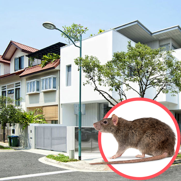 Rodents Singapore Terrace 2 Storeys