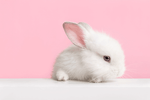 bunny - cruelty-free beauty products