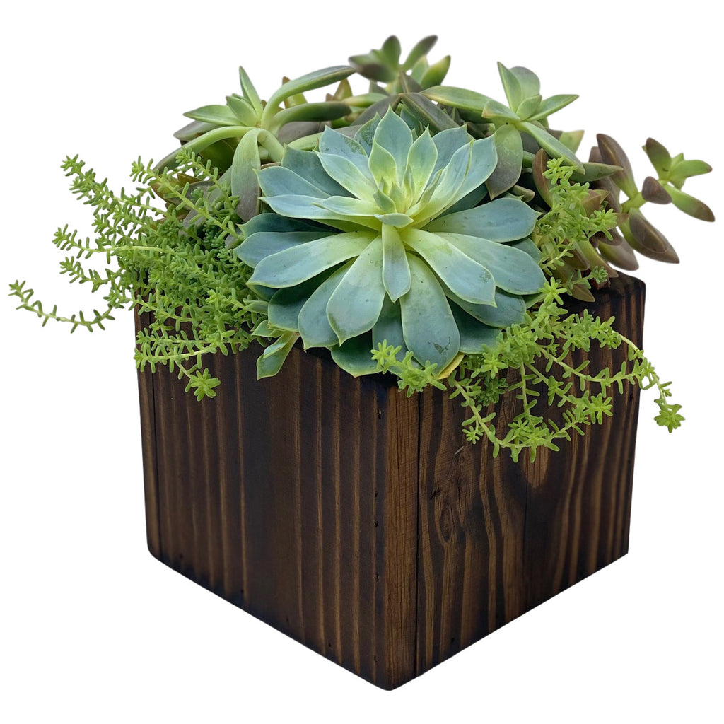 Succulent Plant Combo in Designer Wood Box Arrangement