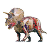 Triceratops 4D Anatomy Model