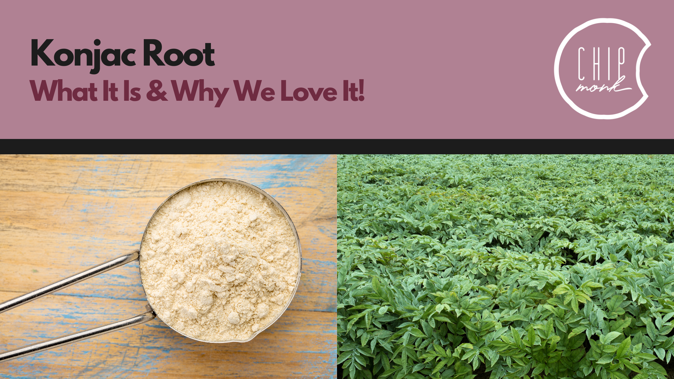 What is Konjac Root