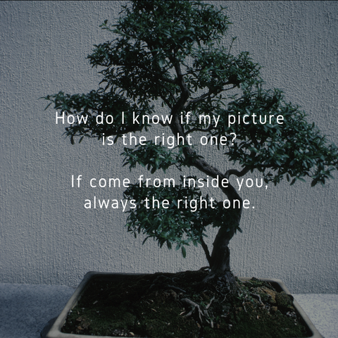 Karate Kid Bonsai Tree Concentration Quote