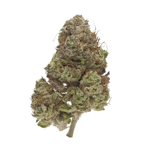 Buy Purple Haze Flower Online