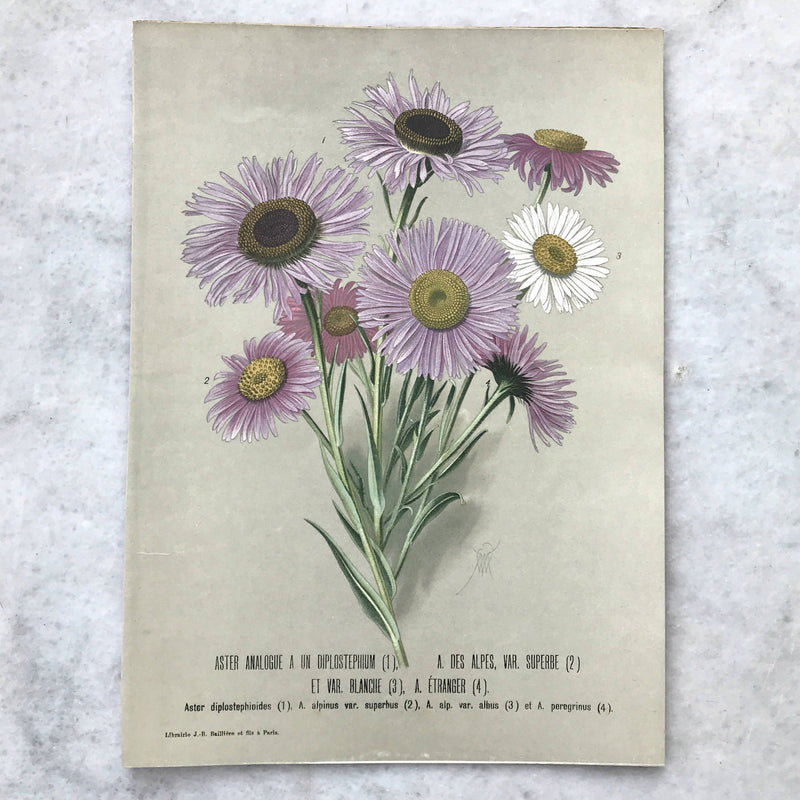 Botanical Paper Prints