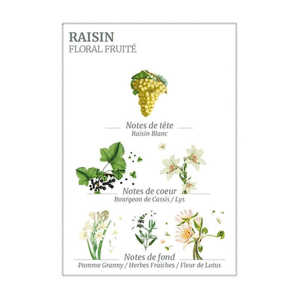 PANIER DES SENS - RENEWING GRAPE HAND CREAM - 75ML