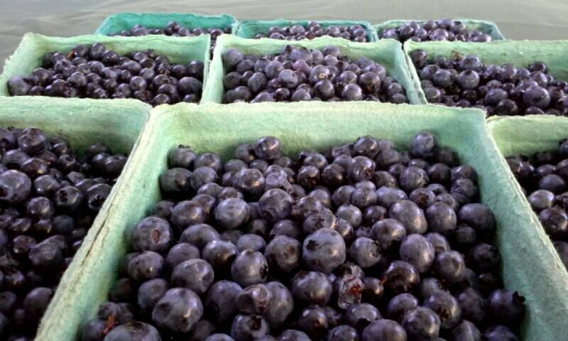 Wild Blueberry Compote