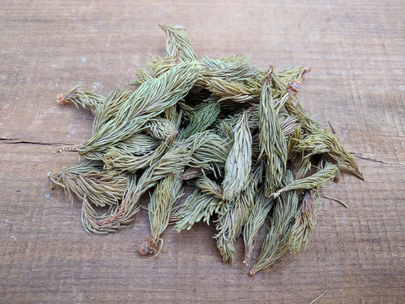 Dried Spruce Tips