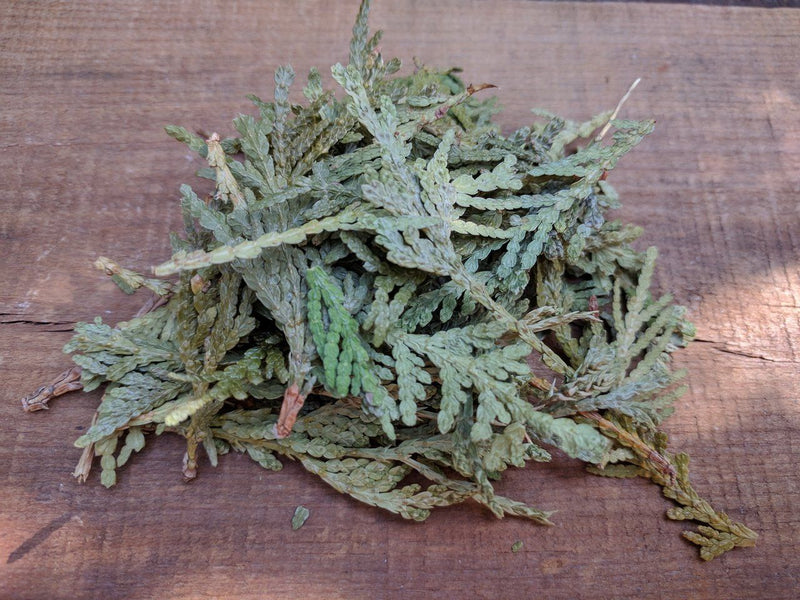 Dried Cedar Leaf