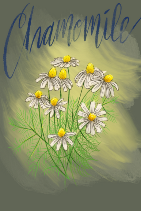 What's the deal with chamomile?