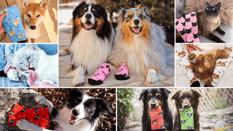 Kadonimo Custom Pet Socks