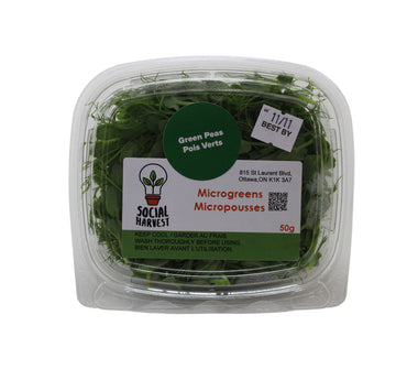 Microgreens Peas Green