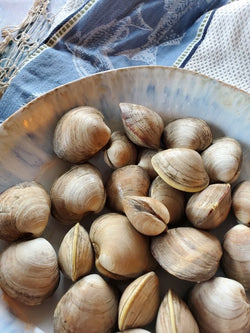 Rhode Island Litteneck Clams, 12 pc