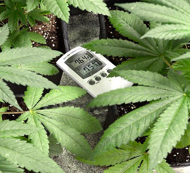 Humidity and Temperature in your Marijuana Grow Room