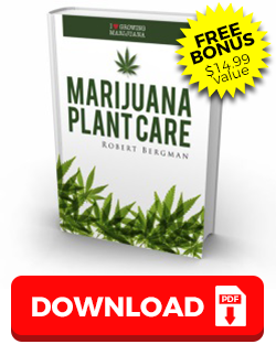 Marijuana Plant Care Guide