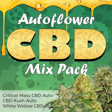 cbd autoflower strains