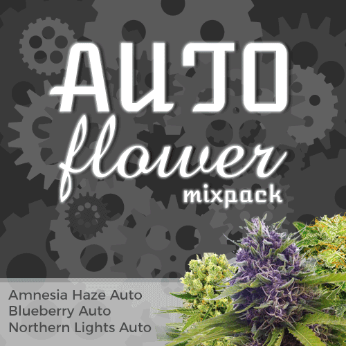 autoflowering seed mix pack