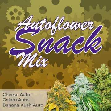 autoflower snack mix