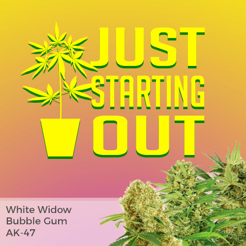 beginner strains for smoking