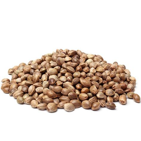 hinu kush seeds for sale