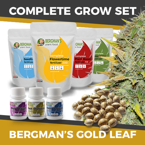 The Complete Marijuana Seed & Grow Set (Gold Leaf)