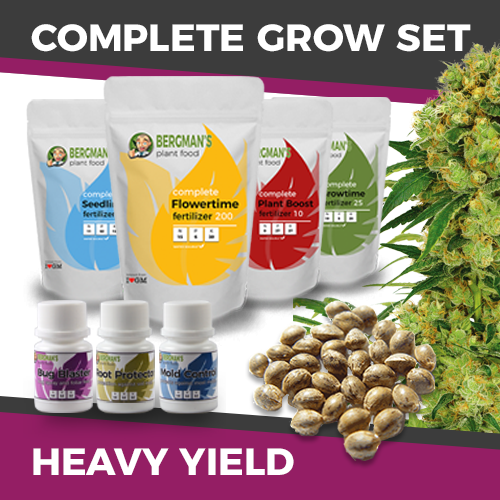 highest yielding marijuana strain grow set