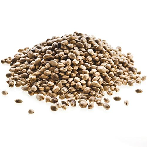bulk gorilla glue marijuana seeds